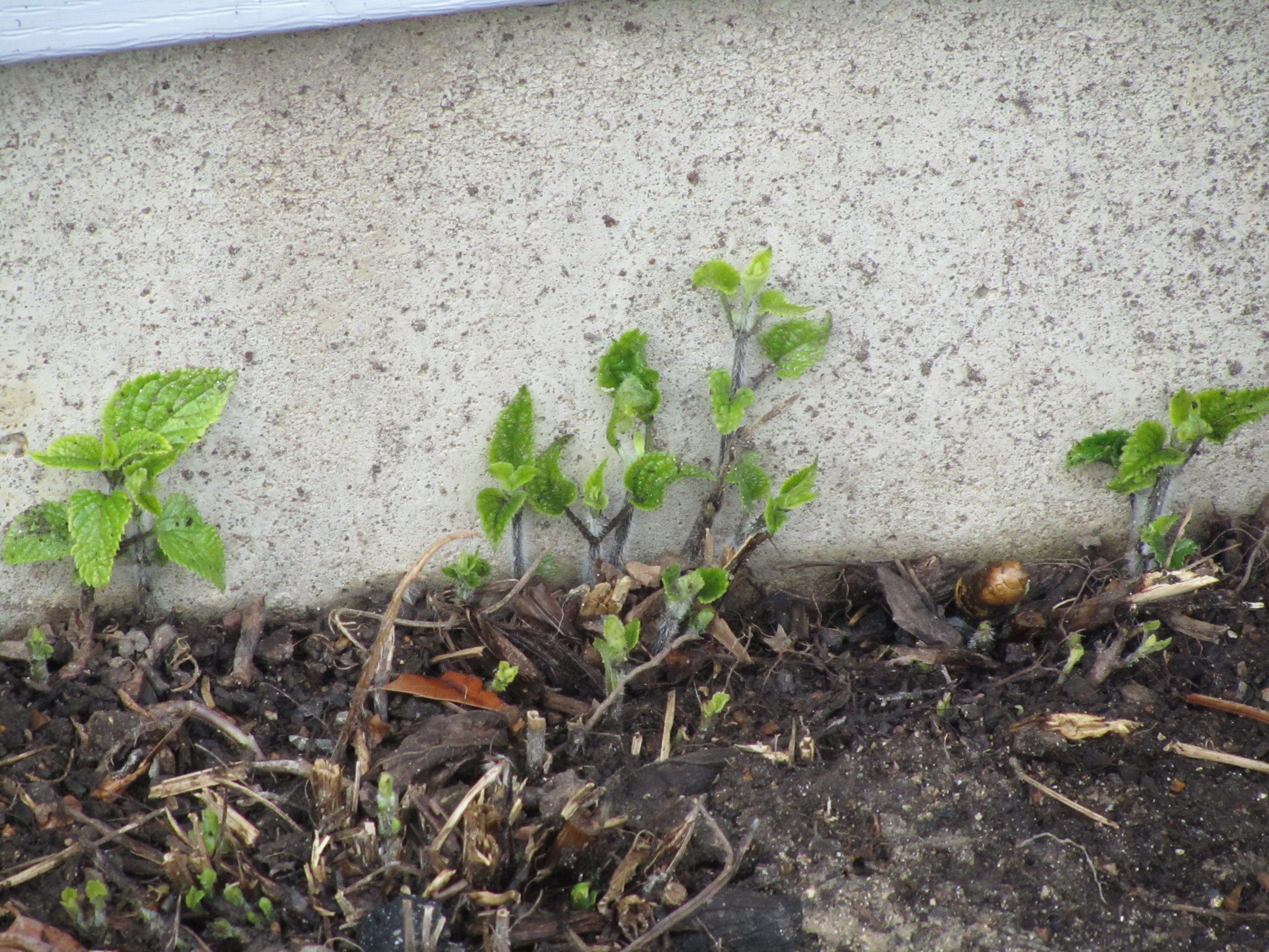 learned is that with some plants if you plant them next to a basement