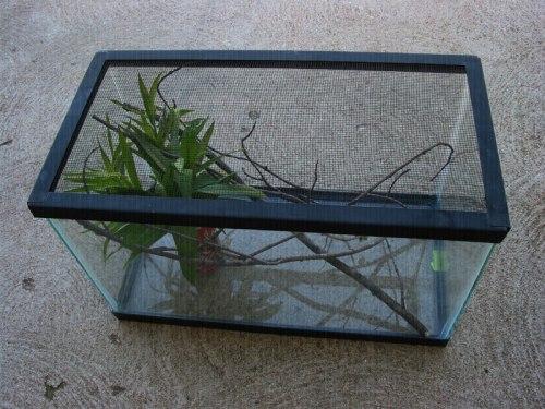 aquarium-IMG_37299