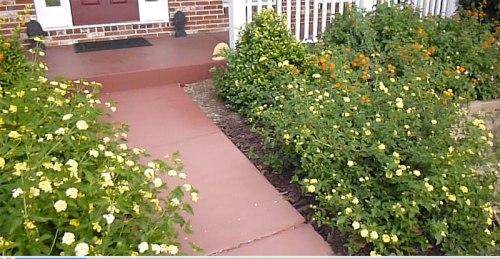 garden-2013-09-15-03