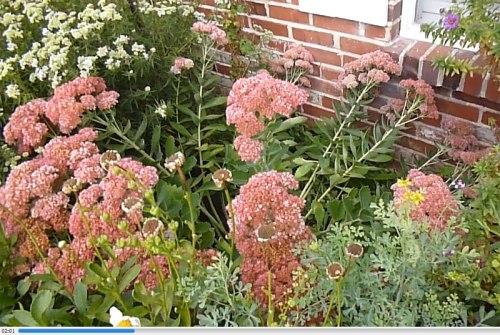 garden-2013-09-15-04