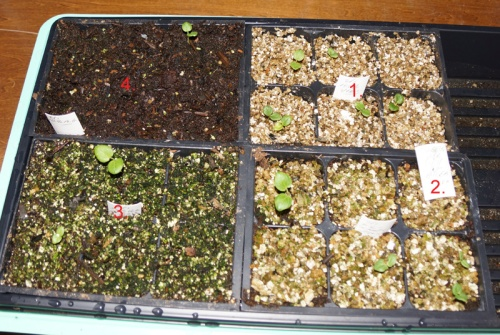 vermiculite-seed-starting-2