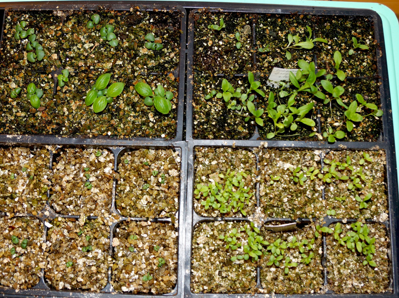vermiculite-seed-starting-d