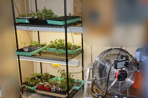 harden-plants-fan