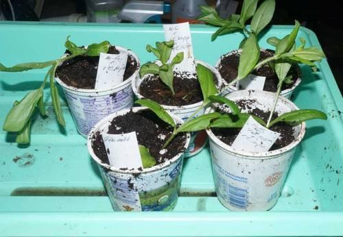 mycorrhiza-test