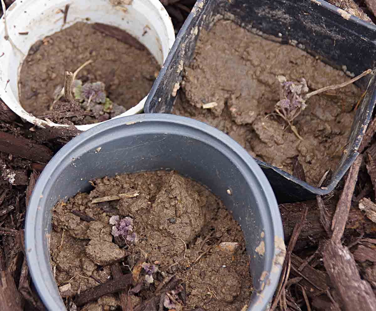 test-outside-plants-in-pots
