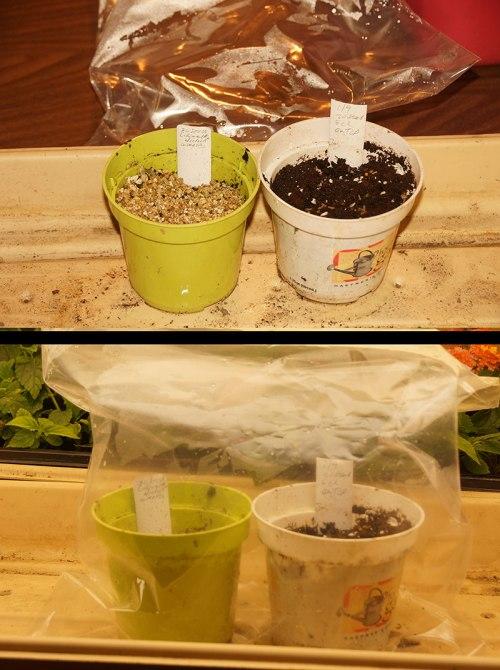 seed-testing
