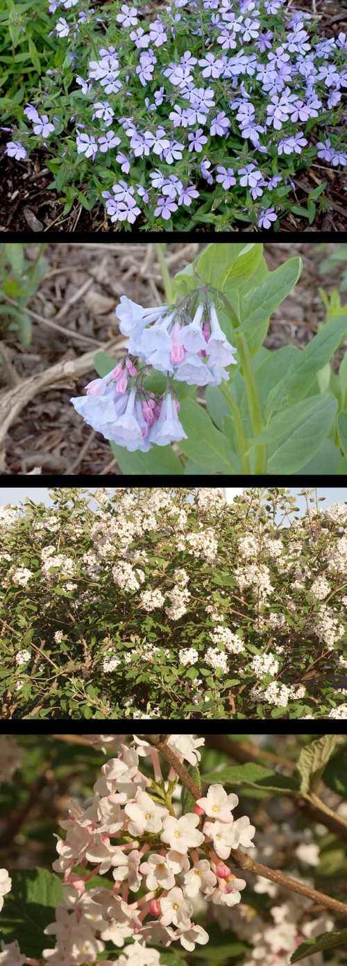 april-flowers-2