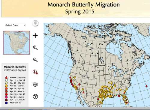 monarchs-in-Saint-Louis