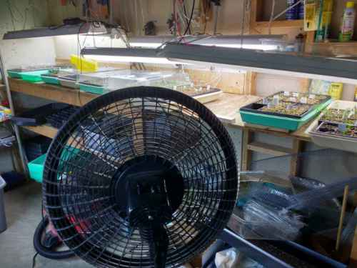 fan-800
