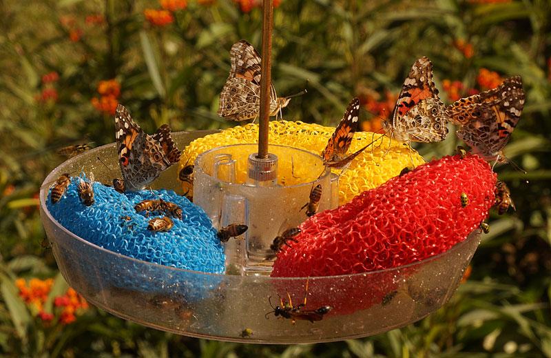butterflies-bees-hummingbird-feeder