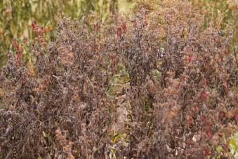 dead-plants-fall-800