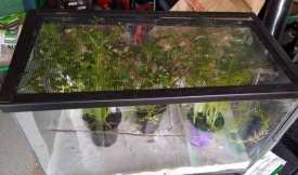 fish-tank-600