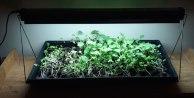 microgreens-2-600